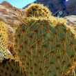 Stock Photo: Cacti in mojave
