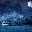 Full moon night in park - Stock Photo