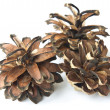 Stock Photo: Three pinecone