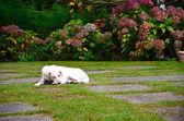 Bílý pes v krásné krajině — Stock fotografie