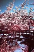 Pink nature — Stock Photo