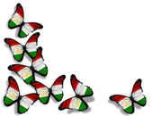 Tajik flag butterflies, isolated on white background — Stock Photo