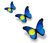 Three Palau flag butterflies, isolated on white — Stock Photo