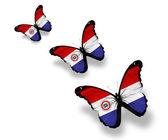 三个巴拉圭国旗蝴蝶,孤立在白色 — 图库照片
