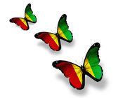 Three Guinean flag butterflies, isolated on white — Stockfoto