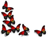 Angolan flag butterflies, isolated on white background — Zdjęcie stockowe