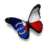 North Carolina flag butterfly, isolated on white — Stock Photo