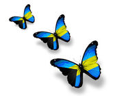 Three Bahamian flag butterflies, isolated on white — Stock Photo
