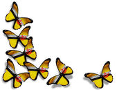 Brunei flag butterflies, isolated on white background — Stock Photo