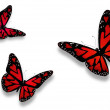 Three red butterflies with hearts on wings — Stock Photo #8845813