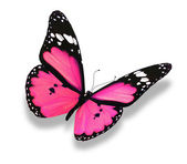 Pink butterfly, isolated on white — Stock Photo
