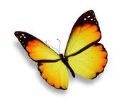 Farfalla arancia, isolato su bianco — Foto Stock