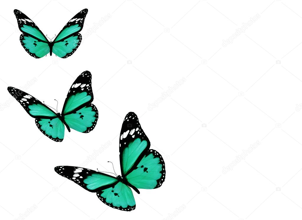 Three blue butterflies, isolated on white background — Stock Photo #9028252