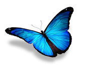 Borboleta azul, isolada no branco — Foto Stock