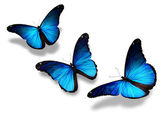 Three blue butterflies flying, isolated on white — Stock Photo