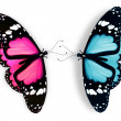 Stock Photo: Pink and blue butterfly, isolated on white