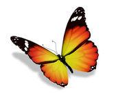 Farfalla gialla, isolato su sfondo bianco — Foto Stock