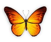 Orange butterfly, isolated on white background — Stock Photo