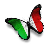 Italian flag butterfly, isolated on white — Stock Photo