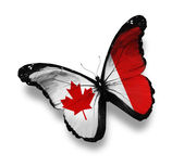 Canadian flag butterfly, isolated on white — Stock Photo