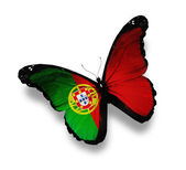 Portuguese flag butterfly, isolated on white — Stock Photo