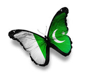 Pakistani flag butterfly, isolated on white — Stock Photo