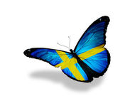 Swedish flag butterfly flying, isolated on white background — Stock Photo