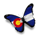 Colorado flag butterfly, isolated on white — Stock Photo