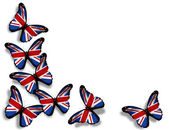 English flag butterflies, isolated on white background — Stock Photo