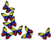 Venezolaanse vlag vlinders, geïsoleerd op witte achtergrond — Stockfoto