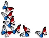 Panamanian flag butterflies, isolated on white background — Stock Photo