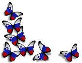 Slovinská vlajka motýly, izolovaných na bílém pozadí — Stock fotografie