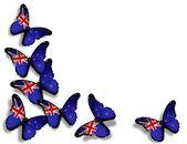 Nyzeeländsk flagg fjärilar, isolerad på vit bakgrund — Stockfoto
