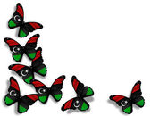 Libyan flag butterflies, isolated on white background — Stock Photo