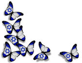 Israeli flag butterflies, isolated on white background — Stock Photo