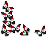 Syrian flag butterflies, isolated on white background — Stock Photo
