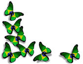 Brazilian flag butterflies, isolated on white background — Stock Photo