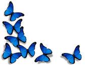 Borboletas azuis, isoladas no fundo branco — Foto Stock
