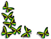 Mariposas de bandera jamaicana, aisladas sobre fondo blanco — Foto de Stock