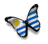 Uruguayan flag butterfly, isolated on white — Stock Photo