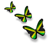 Three Jamaican flag butterflies, isolated on white — Stock Photo