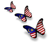Three Malaysian flag butterflies, isolated on white — Stock fotografie