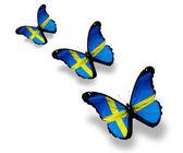Trzy szwedzkie flagi motyle na białym tle — Zdjęcie stockowe