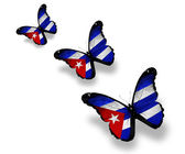 Three Cuban flag butterflies, isolated on white — Stock Photo