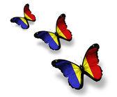 Três borboletas da bandeira romena, isoladas no branco — Foto Stock