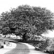 Foto Stock: Old tree and road