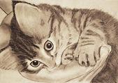 Lindo gatito — Foto de Stock