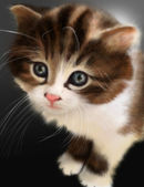 Carino gattino — Foto Stock