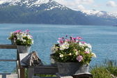 Alaskan flowers on the background of the mountains — Stock Photo