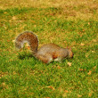 Squirrel eating something — Stock Photo #8538422